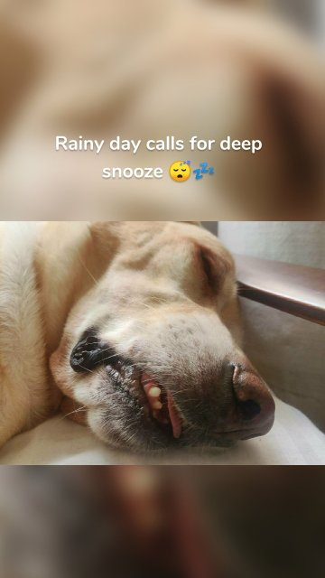 Rainy day calls for deep snooze 😴💤
